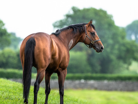 New Gr.3 winner for Mehmas as Keeper Of Time lands Classic trial