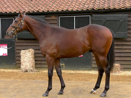 Another big win for Tally-Ho bred Mehmas colt Caturra