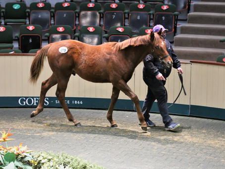 Mehmas colt tops first day of Goffs