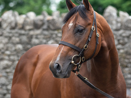 Mehmas filly Going Global remains unbeaten Stateside with G3 win