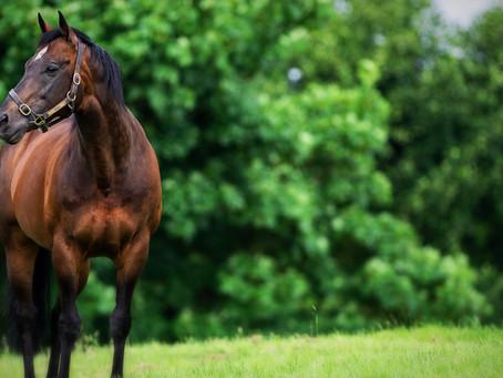 Record-breaking Kodiac adds a 9th 2yo stakes winner of 2020