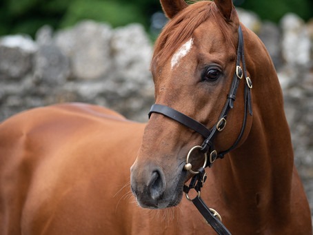 Another new winner for Galileo Gold