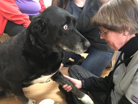 Elder Pet Care, Ft. Collins nonprofit which helps seniors pay for vet care, faces uncertain future