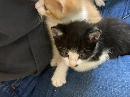 Kittens for Adoption!