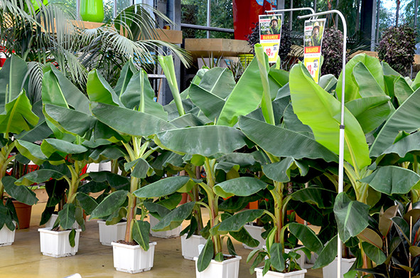 foire aux plantes p pini res de bavent jardinerie animalerie d coration caen. Black Bedroom Furniture Sets. Home Design Ideas