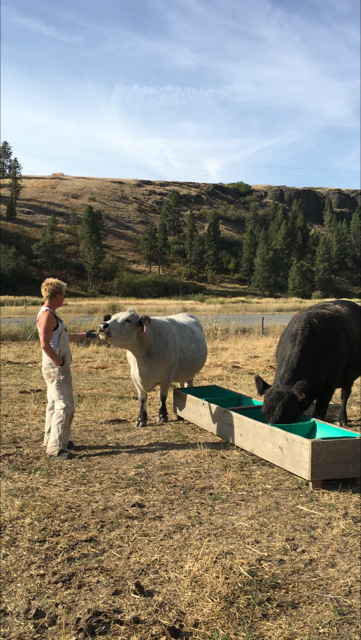 Kim Weerts with cows