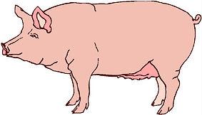 schweine-clipart-3.jpg