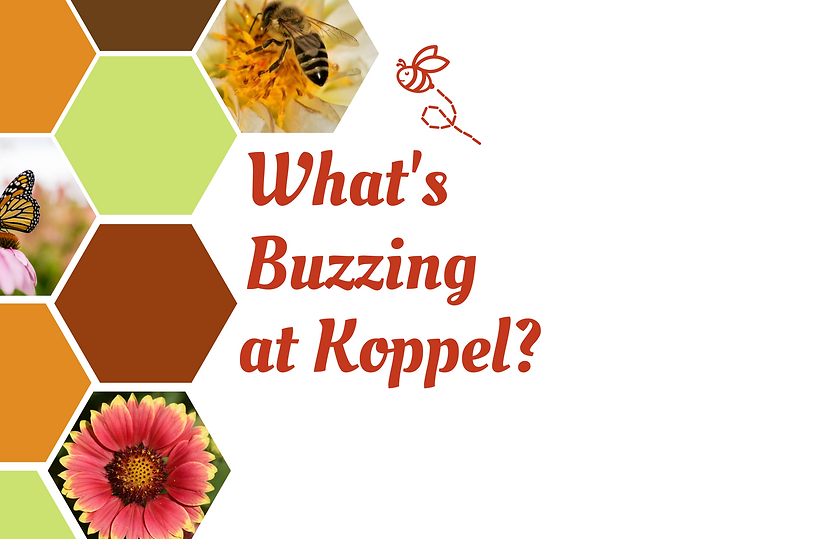 What's Buzzing at Koppel.png