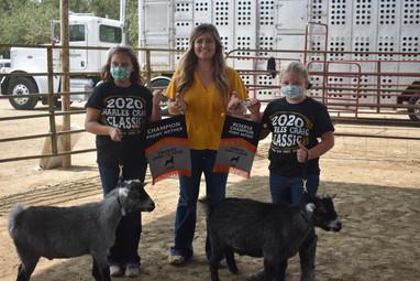 Pygmy Goat Champions