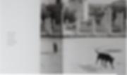 Screen Shot 2020-07-09 at 10.41.04 AM.pn
