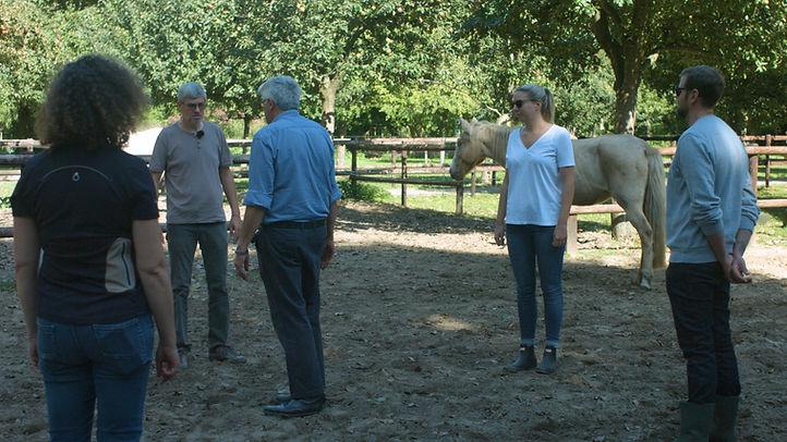 paarden opstelling.jpg