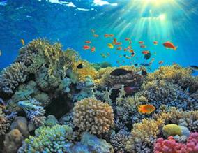 October Habitat Highlight: Coral Reefs