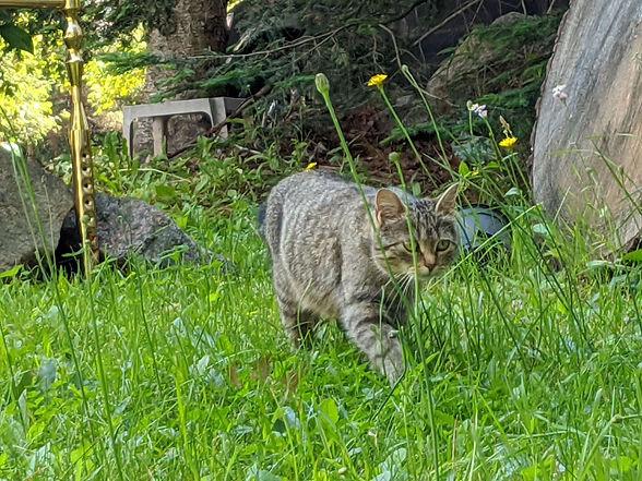 Mommy Cat5.jpg