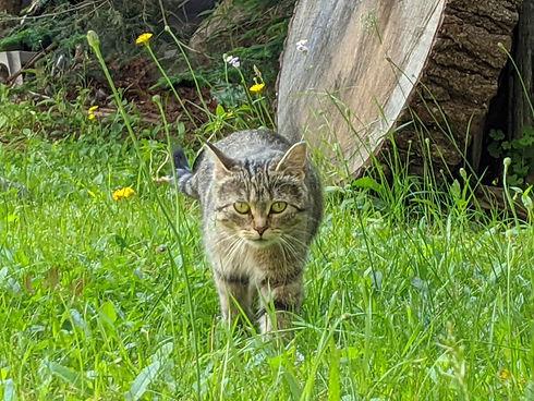 Mommy Cat4.jpg