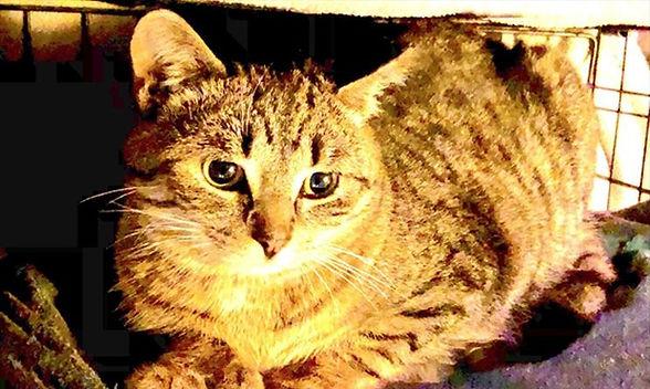 EDT MRC PAINT LAKE CATS 2 ZH JAN_Super_P