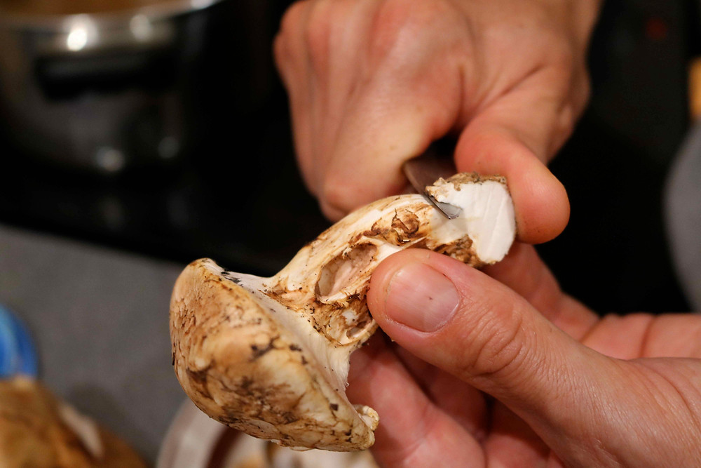 triming the matsutake