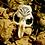 Thumbnail: Marsh Dweller Muskrat Skull