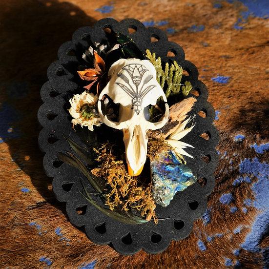 Water Barer Muskrat Skull