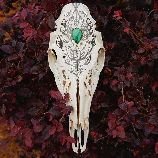 Arcadia Doe Skull