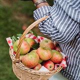 cesto di mele.jpg