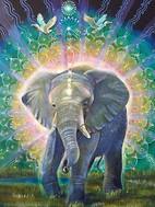 Elephant portrait.jpg