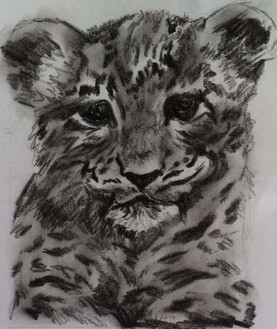 Young leopard, 2014