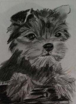 Puppy, 2013