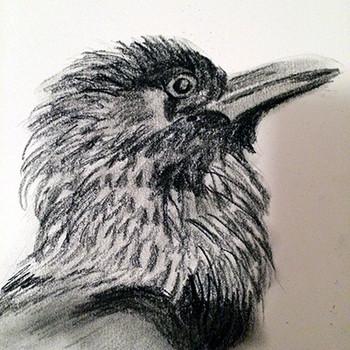 Raven portrait, 2016