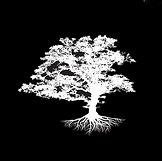 Tree Inverse Square.jpg
