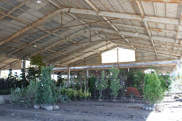 田主丸町の植木市場