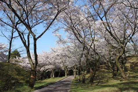 町内きっての桜の名所として知られる平原公園
