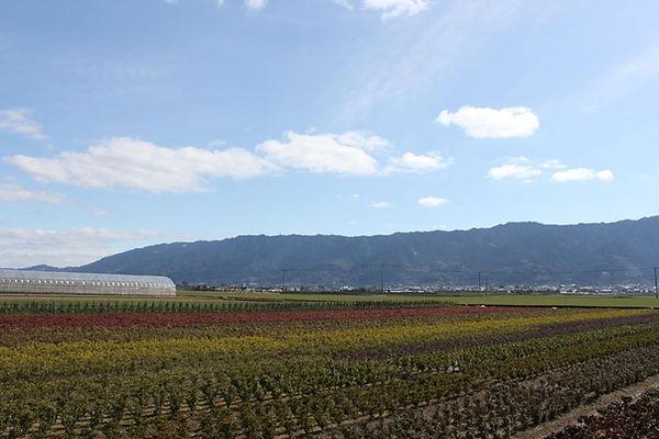 耳納連山と植木・苗木
