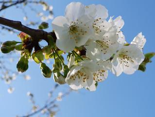 Бушетинская весна