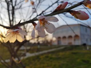 Весна по календарю