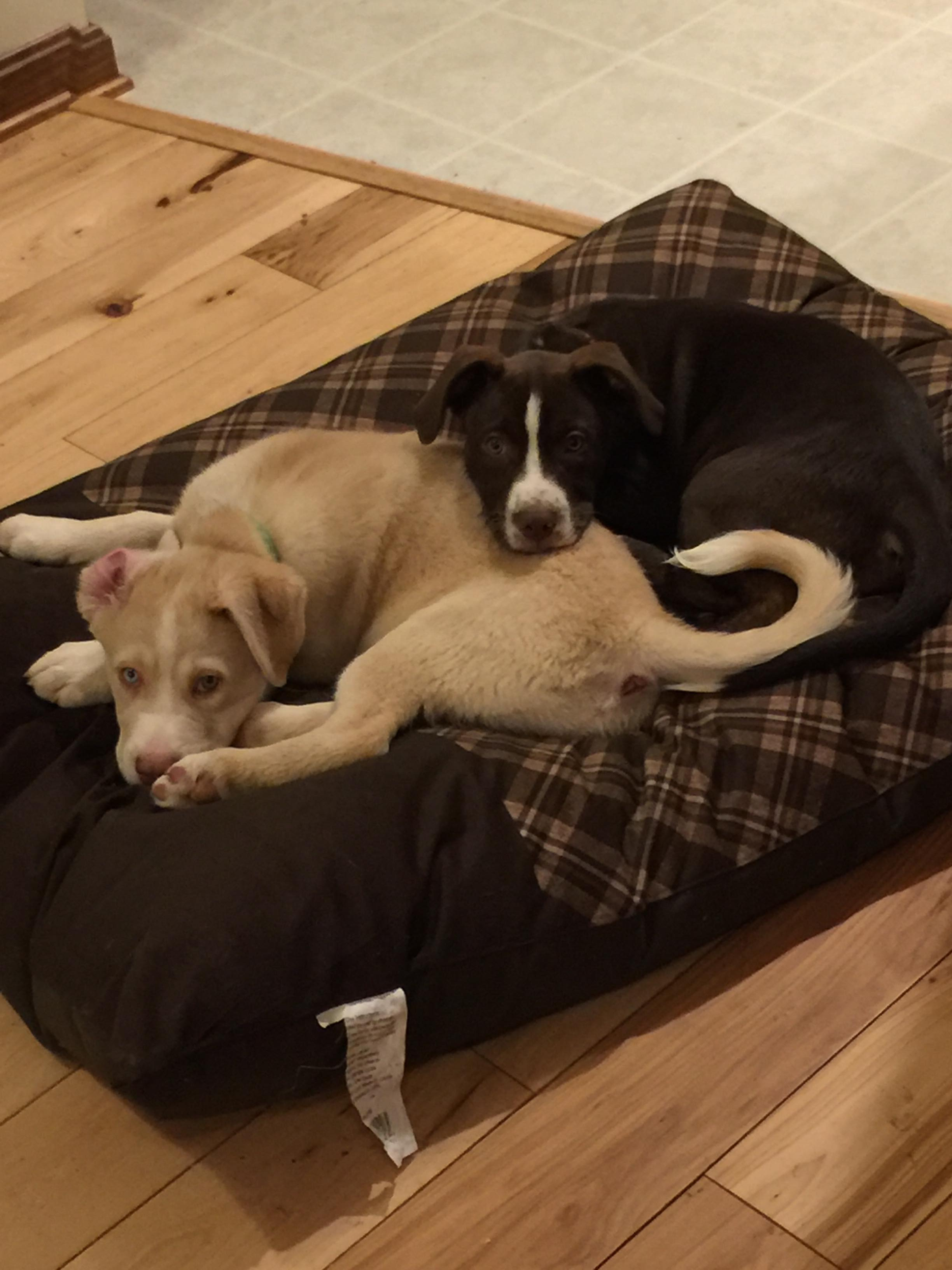 Colt and Roxy