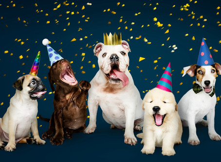 Fetch has finally arrived! Time to party! (no humans allowed)