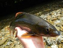 moniteur guide de pêche en Savoie