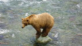 Katmai Bears 101.jpg