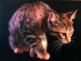Cat's Meow Fundraiser