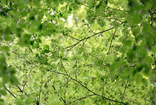 Frisches Grün im Frühling
