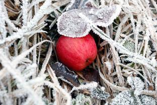 Apfel und Frost