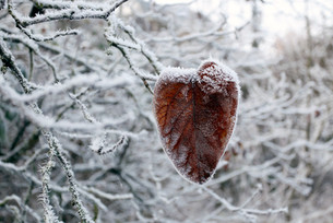 Blatt im Winter
