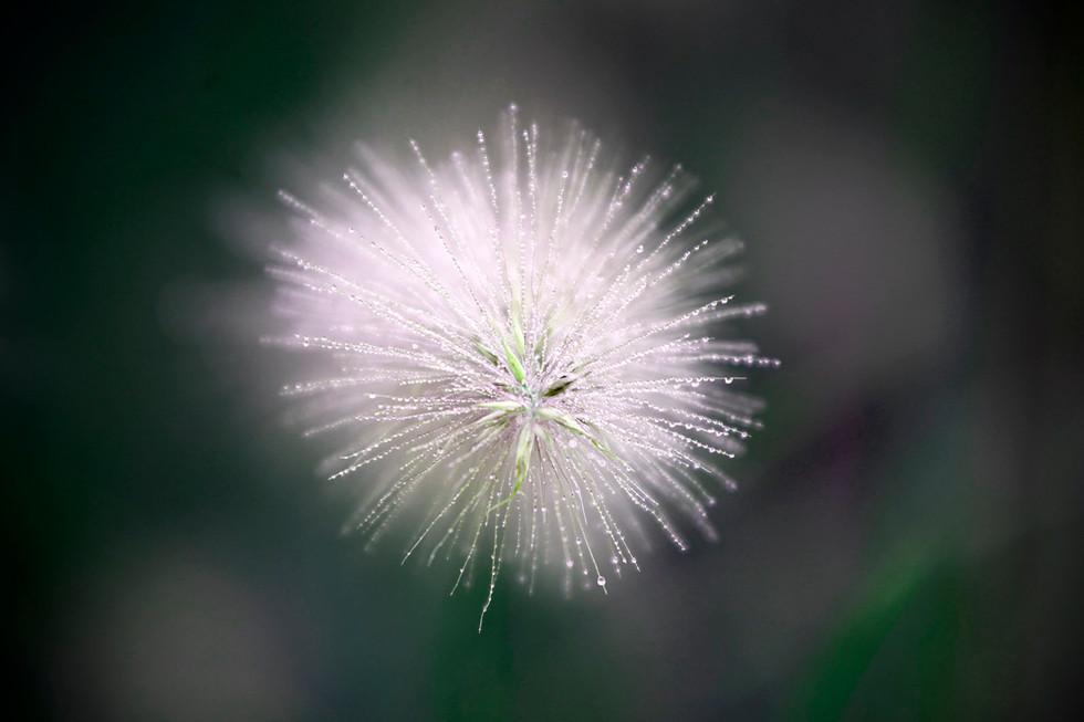 Blütendetail