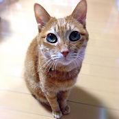 ブランドイメージの猫の画像