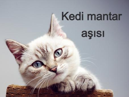 Kedi mantar aşısı
