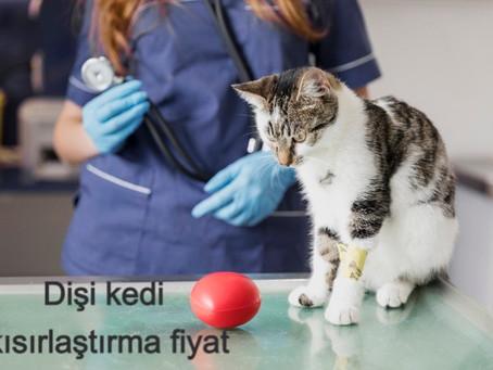 Dişi kedi kısırlaştırma fiyatı