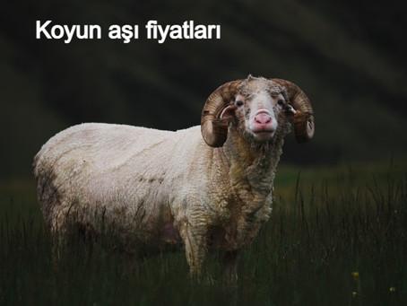 Koyun aşı fiyatları