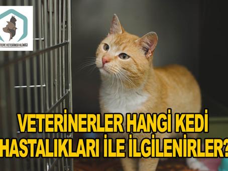 Veterinerler Hangi Kedi Hastalıkları ile İlgilenirler?