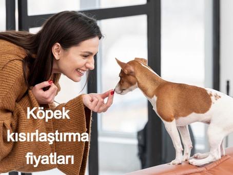 Köpek kısırlaştırma fiyatları