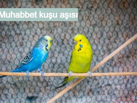 Muhabbet kuşu aşısı